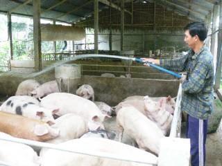 Tăng cường quản lý chất lượng vật tư nông nghiệp và đảm bảo an toàn thực phẩm