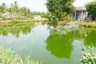 Ba Tri kiên quyết không nuôi tôm nước mặn trong vùng ngọt hóa