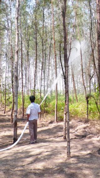 Ba huyện vùng biển cảnh giác cháy rừng