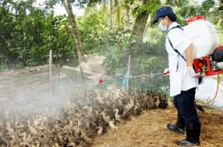 Cảnh báo dịch cúm gia cầm và biện pháp phòng dịch