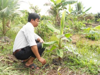 Góp phần đa dạng hóa cây trồng