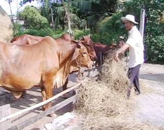 Mô hình nuôi bò sinh sản phát huy hiệu quả
