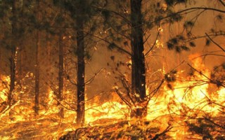 Australia nỗ lực dập tắt các đám cháy rừng do sét đánh ở Victoria