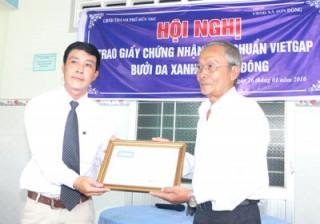 Gần 8,1ha bưởi da xanh được chứng nhận VietGAP