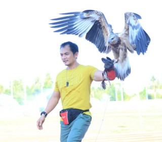 """Falconry - bộ môn huấn luyện """"chúa tể bầu trời"""""""