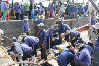 Hơn 14.000 lao động trong các tổ đội đánh bắt thủy sản