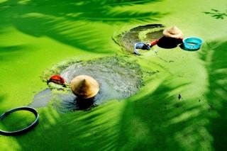 Nhiếp ảnh - nghệ thuật phản ánh cuộc sống