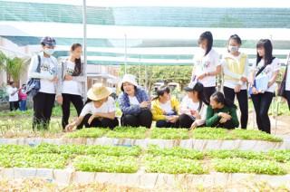 Giúp học sinh trồng rau hữu cơ
