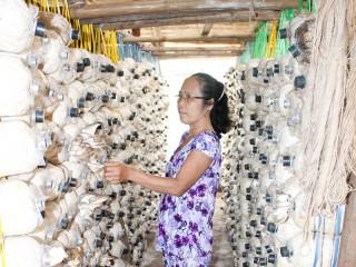 Tổ hợp tác sản xuất phôi nấm và nấm hỗ trợ phụ nữ thoát nghèo