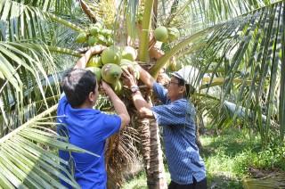 Giá dừa uống nước xiêm xanh và bưởi da xanh tăng cao