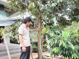 Hưng Khánh Trung B: Nông dân liên kết trồng sầu riêng đạt chuẩn VietGAP