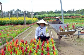 Đề án Tái cơ cấu ngành nông nghiệp: Thúc đẩy sản xuất hiệu quả, cải thiện thu nhập người dân