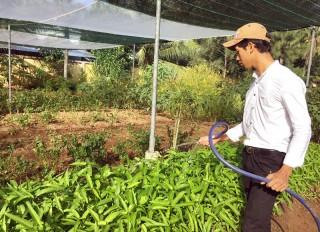 Nhân rộng mô hình trồng rau hữu cơ trong trường học