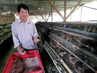 Quản lý có hiệu quả chất thải chăn nuôi gia cầm