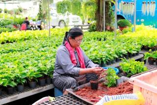Ấn tượng về sản xuất nông nghiệp ở Thái Lan