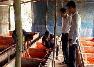Mô hình nuôi lươn giống ở xã Tiên Thủy
