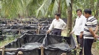 Hiệu quả mô hình nuôi lươn dưới tán dừa
