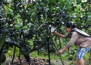 Lưu ý khôi phục cây trồng sau bão
