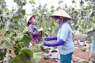 Kết quả thực hiện Đề án sinh kế thoát nghèo bền vững
