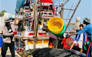"""EU gỡ bỏ """"thẻ vàng"""" đối với nghề cá Thái Lan"""