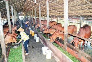 Phát triển nông nghiệp toàn diện, bền vững