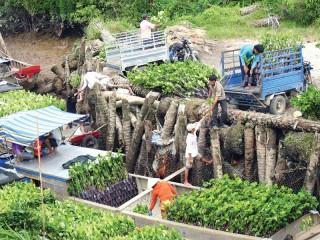 Tập trung nâng cấp chuỗi giá trị sản xuất cây giống