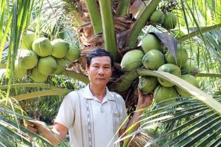 Chuyển đổi từ trồng lúa sang trồng dừa xiêm xanh đạt hiệu quả kinh tế cao