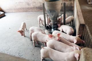 Biện pháp phòng bệnh lở mồm long móng trong chăn nuôi