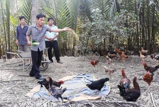 Thanh niên Phú Điền hợp tác nuôi gà hiệu quả