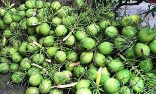 Dừa uống nước tăng giá mùa nắng nóng