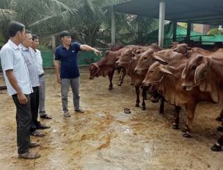 Hợp tác xã nông nghiệp Mỹ Chánh: Liên kết chăn nuôi bò chất lượng cao
