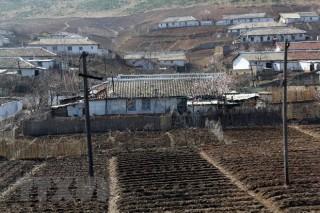 Việt Nam hỗ trợ 5.000 tấn gạo giúp Triều Tiên khắc phục hậu quả thiên tai