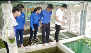 Mô hình sản xuất và kinh doanh cá cảnh 7 màu