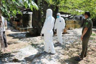 Công bố dịch tả lợn châu Phi trên địa bàn xã Phú Túc và Hữu Định