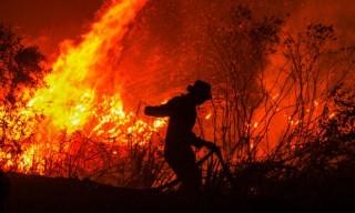 Cháy rừng ở Indonesia gây lo ngại tăng nhiệt độ toàn cầu