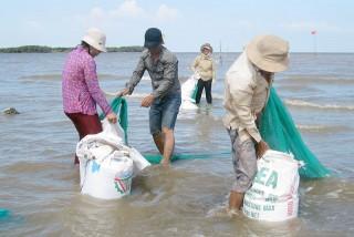 Hợp tác xã Thủy sản Đồng Tâm khai thác hơn 370 tấn nghêu