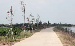 32 cây xanh tại hồ chứa nước ngọt huyện Ba Tri bị chặt phá