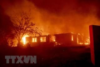 Tổng thống Mỹ tranh cãi với lãnh đạo California về các vụ cháy rừng