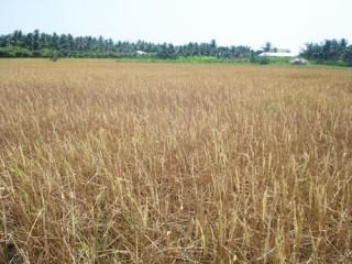 Chủ động phòng chống hạn mặn mùa khô