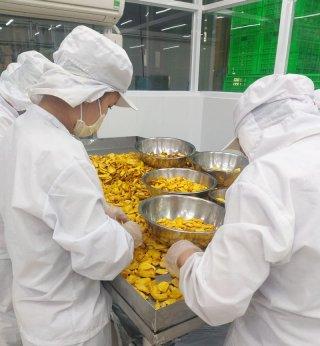 Tháng 1-2020, kim ngạch xuất khẩu đạt 81,13 triệu USD