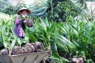 Lối mở cho sản xuất cây giống