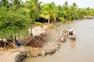 Cây dừa đi cùng lịch sử đất và người