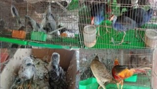 Tăng cường quản lý động vật hoang dã