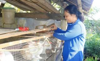 Hiệu quả từ mô hình nông dân dạy nông dân