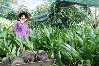 Tiêu chí cây đầu dòng đối với bưởi da xanh và cây dừa mẹ
