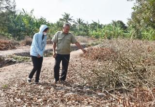 Hạn mặn đe dọa vùng cây ăn trái đặc sản