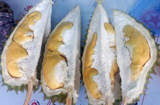 Sầu riêng Tân Phú được mùa, được giá