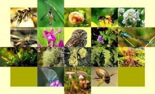 Hưởng ứng Ngày quốc tế Đa dạng sinh học