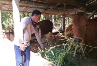 Giồng Trôm nhân rộng mô hình quản lý chất thải chăn nuôi