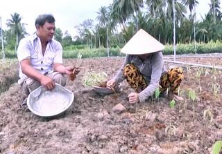 Tân Thiềng xây dựng, nâng cấp chuỗi giá trị cây giống